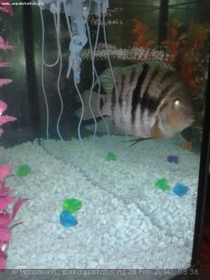 Помогите опознать рыбку опознание рыб  - 20140227_220602.jpg