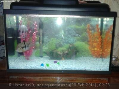 Фото аквариумов объемом от 31 до 100 литров - 20140228_091845.jpg