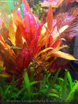 Фото аквариумов объемом от 31 до 100 литров - DSCN2019.JPG