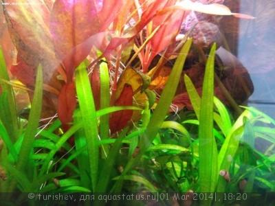 Фото аквариумов объемом от 31 до 100 литров - DSCN2018.JPG