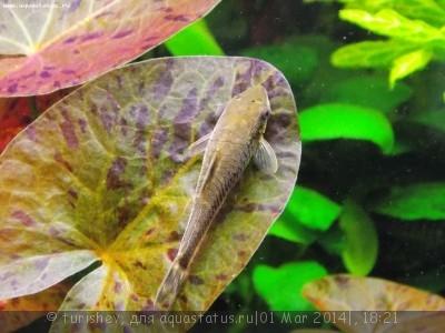Фото аквариумов объемом от 31 до 100 литров - DSCN2027.JPG