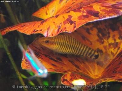Фото аквариумов объемом от 31 до 100 литров - DSCN2063.JPG