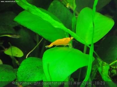 Фото аквариумов объемом от 31 до 100 литров - DSCN2037.JPG