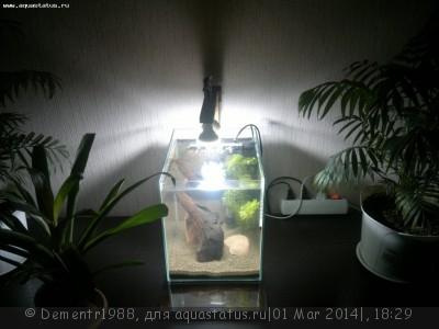Светодиодное освещение аквариума - 2014-03-01-116.jpg