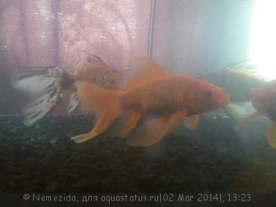 Помогите опознать рыбку опознание рыб  - P1200869.JPG