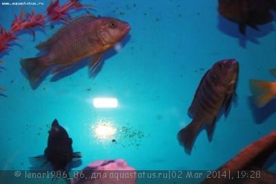 Помогите опознать рыбку опознание рыб  - IMG_6621.JPG