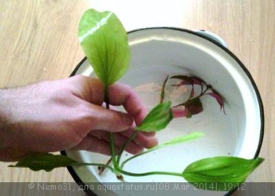 Опознание аквариумных растений - эх.jpg