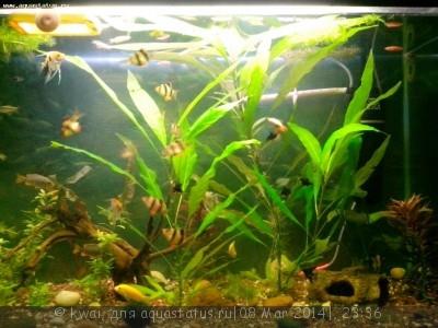 Опознание аквариумных растений - IMG_20140308_215646.jpg