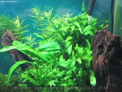 Опознание аквариумных растений - Изображение 079.jpg