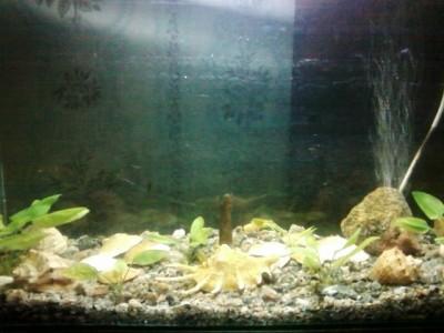 Мой аквариум 30 литров MORRO  - SP_A0040.jpg