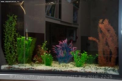 Мой первый самодельный аквариум 160 литров Andrei_77  - DSC_0481.jpg