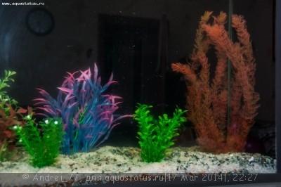 Мой первый самодельный аквариум 160 литров Andrei_77  - DSC_0495.jpg