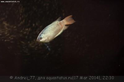 Мой первый самодельный аквариум 160 литров Andrei_77  - DSC_0519.jpg