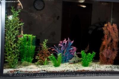 Мой первый самодельный аквариум 160 литров Andrei_77  - DSC_0548.jpg