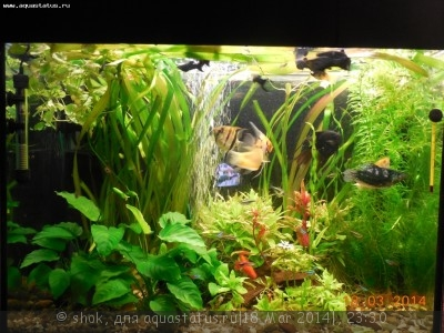 Мой ленивый аквариум 170 литров shok  - DSCN0853.JPG