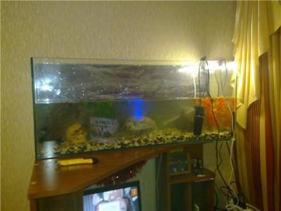 Мой аквариум 100 литров magadan_kmv  - 0db3ac8d581b.jpg