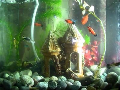 Мой первый аквариум 15 литров nikita9511  - 850e50ccadab.jpg