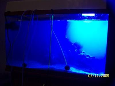 Моё знакомство с морским аквариумом 150 литров mishael  - 0_180f3_ed2877e1_L.jpg
