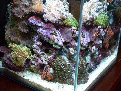 Морской мини аквариум 30 литров Roman  - CIMG1015.JPG