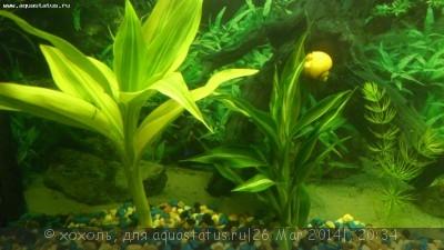 Аквариумные растения - опознание растений. - DSC_0018[1].jpg