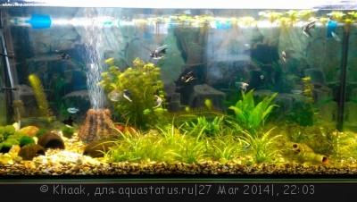 Мой новый аквариум 290 литров Khaak  - IMG_20140327_161551.jpg