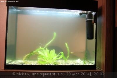 Мутная вода в аквариуме, муть в аквариуме - IMG_1347.JPG