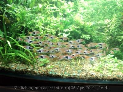 Фото аквариумов объемом от 101 до 250 литров - 011.JPG