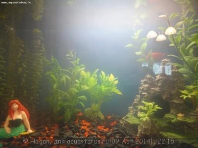 Мутная вода в аквариуме, муть в аквариуме - DSC08683.JPG