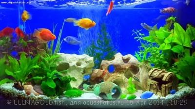 Выбор внешнего фильтра для аквариума. Какой выбрать внешний фильтр? - 20140406_143839_LLS.jpg