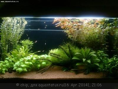 Фото аквариумов объемом от 101 до 250 литров - Фото0162.jpg