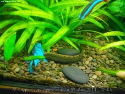 Помогите опознать рыбку опознание рыб  - IMG_20140503_212545.jpg