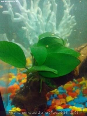 Мутная вода в аквариуме, муть в аквариуме - IMG_20140507_212555.jpg