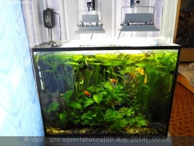 Мой ленивый аквариум 170 литров shok  - SAM_0008.JPG