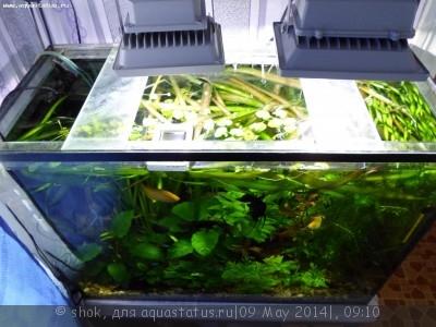 Мой ленивый аквариум 170 литров shok  - SAM_0016.JPG