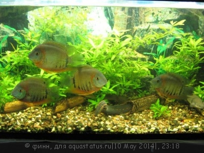Фото аквариумов объемом от 101 до 250 литров - IMG_2030.JPG