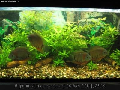 Фото аквариумов объемом от 101 до 250 литров - IMG_2031.JPG
