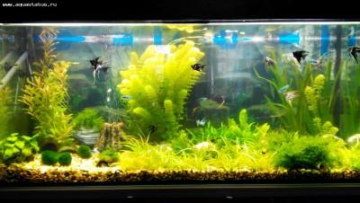 Мой новый аквариум 290 литров Khaak  - IMG_20140506_130713.jpg