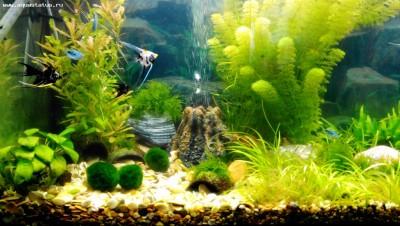 Мой новый аквариум 290 литров Khaak  - IMG_20140506_130643.jpg