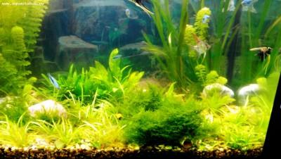 Мой новый аквариум 290 литров Khaak  - IMG_20140506_130653.jpg