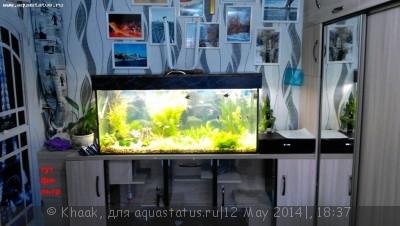 Мой новый аквариум 290 литров Khaak  - IMG_20140506_131615.jpg