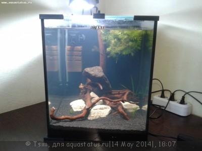 Мой второй аквариум 30 литров Tsim  - 20140514_210446.jpg
