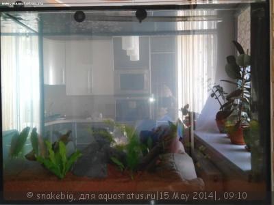 Сквозной аквариум 230 литров snakebig  - IMG_20140510_131531.jpg