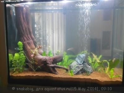 Сквозной аквариум 230 литров snakebig  - IMG_20140510_205705.jpg
