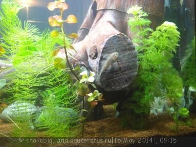 Сквозной аквариум 230 литров snakebig  - IMG_20140512_212148.jpg