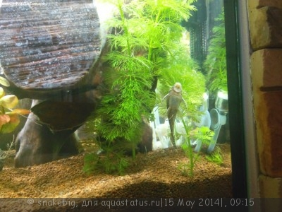 Сквозной аквариум 230 литров snakebig  - IMG_20140512_212207.jpg