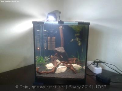 Мой второй аквариум 30 литров Tsim  - 20140515_192554.jpg