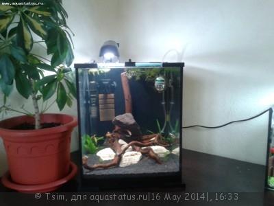 Мой второй аквариум 30 литров Tsim  - 20140516_191239.jpg