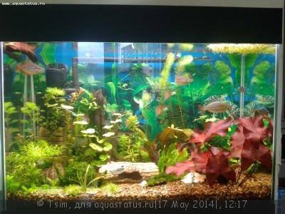 Мой первый аквариум 150 литров Tsim  - 20140517_145440.jpg