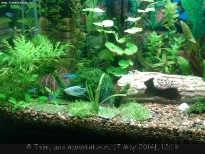 Мой первый аквариум 150 литров Tsim  - 20140517_145526.jpg