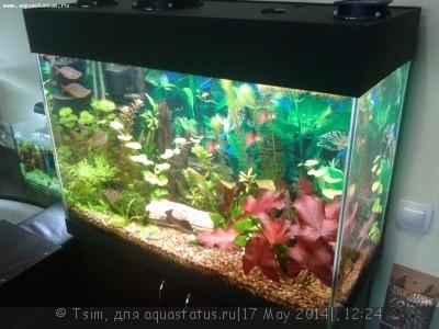 Мой первый аквариум 150 литров Tsim  - 20140517_152312.jpg